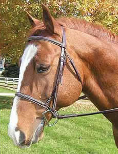 Legacy Premium Fancy Stitched Round Raised English Bridle Snaffle Bridle Laced Reins Havana O/S XL Horse