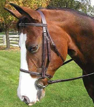 Legacy Premium Plain Round Raised English Bridle Snaffle Bridle Laced Reins Havana O/S XL Horse