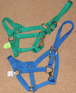 Pony Cob or Young Horse Nylon Halter with Throat Snap Blue Green