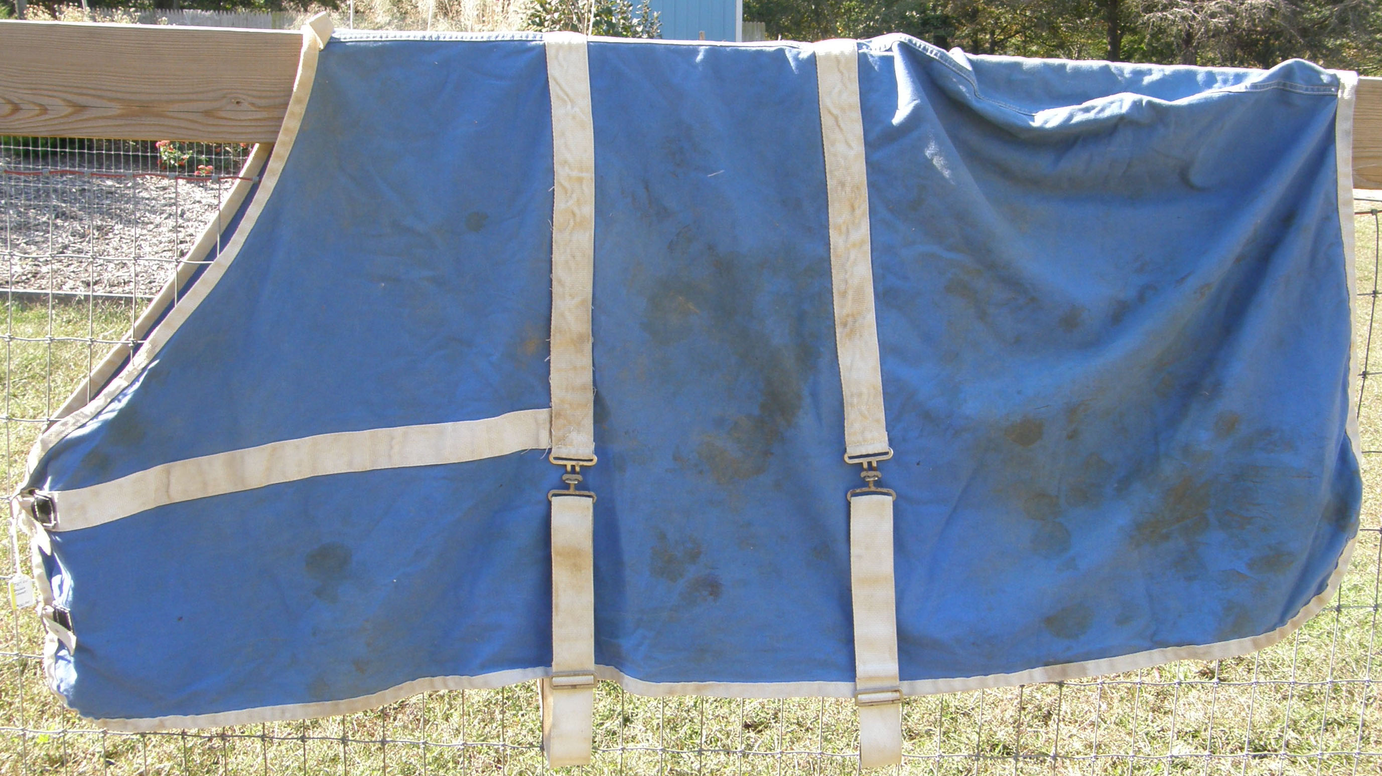 "72"" OF Cotton Stable Sheet Horse Blue/White"