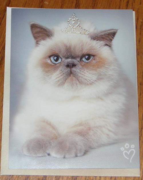 Birthday Card Leanin' Tree Greeting Card Persian Himalayan Cat Card Rachael Hale