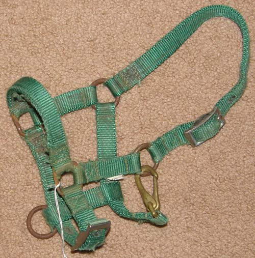Adjustable Nylon Halter with Throat Snap Miniature Horse Pony Foal Mini Green