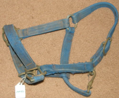 Nylon Halter with Throat Snap Pony Weanling Horse Halter Blue